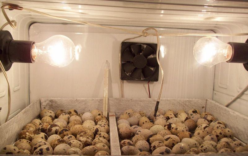 Периодическая вентиляция в инкубаторе